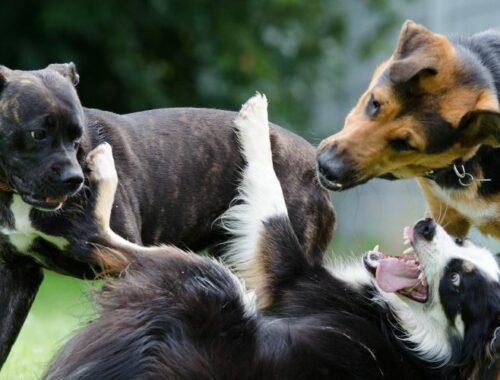 spielen hunde übertreibungen