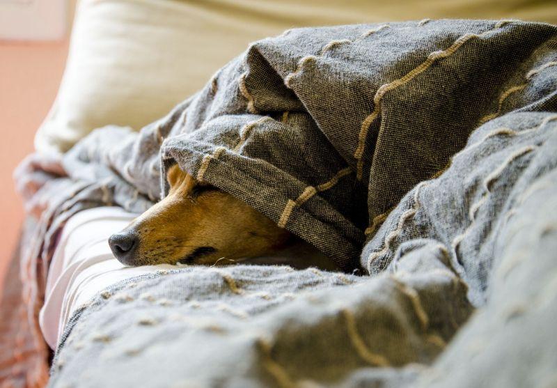 Hund Cushing nachts