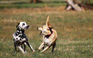 spielen Hunde Spielgesicht