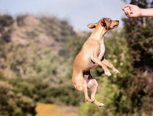 hyperaktiver Hund natürliche Beruhigungsmittel