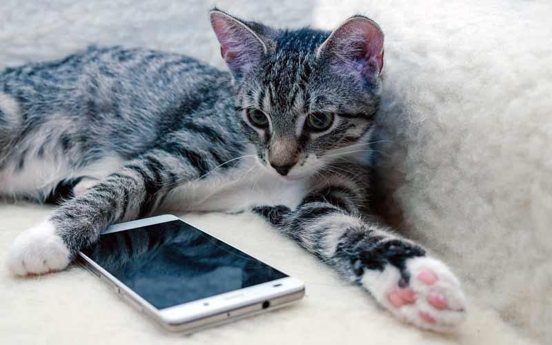 Telefonische Tierpsychologie Beratung
